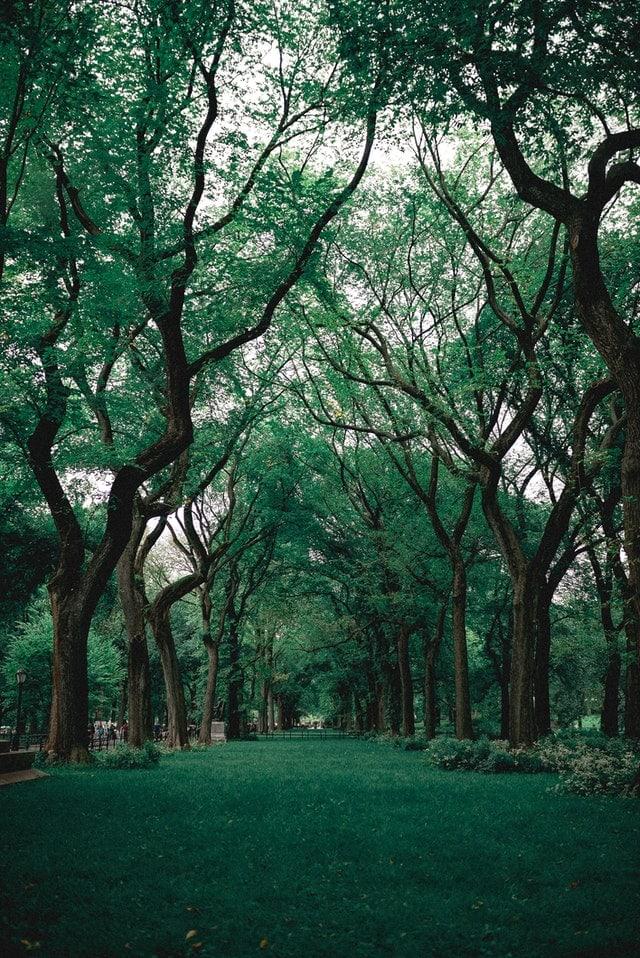 se reposer dans un parc à Lyon