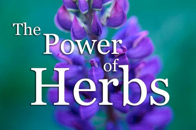 lk-articles-power-of-herbs-658x437