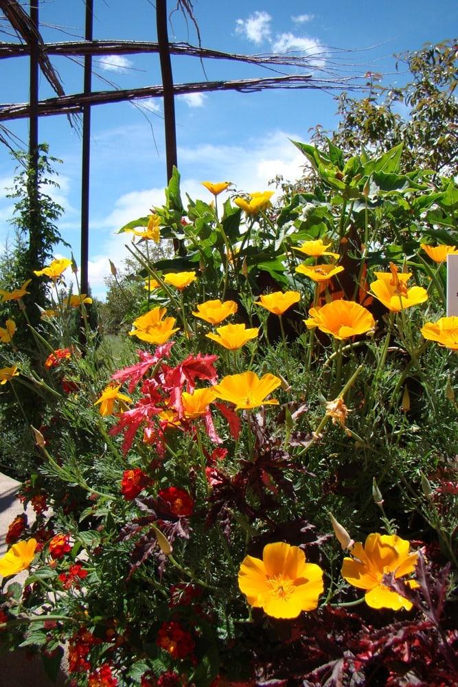 SFBG Summer Poppies credit Sarah Spearman
