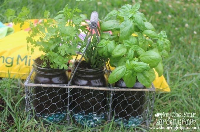 Mason Jar Herb Garden - 2