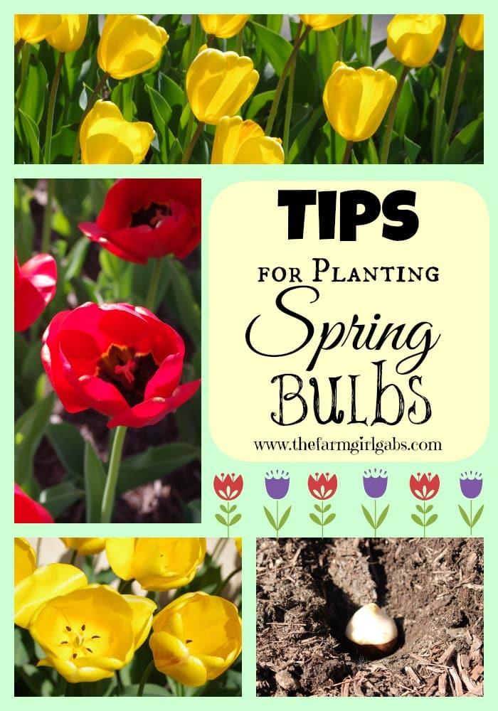 Tips for Planting Spring Bulbs from How Does Your Garden Grow? ~ www.thefarmgirlgabs.com