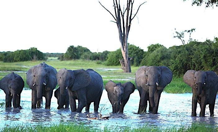 チョベのサブティで見た象のグループ