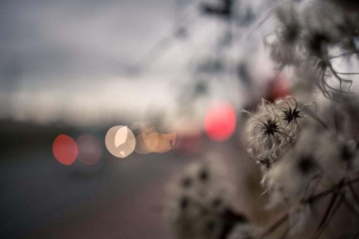 kleine Poesie am Straßenrand - zur goldenen Stunde in der Weimarischen Straße in Erfurt im Dezember fotografiert