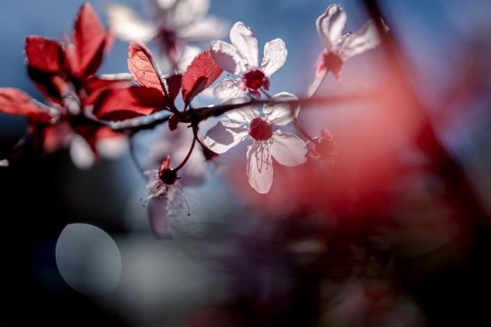 Macroaufnahme von Blüten, gegen die Sonne fotografiert