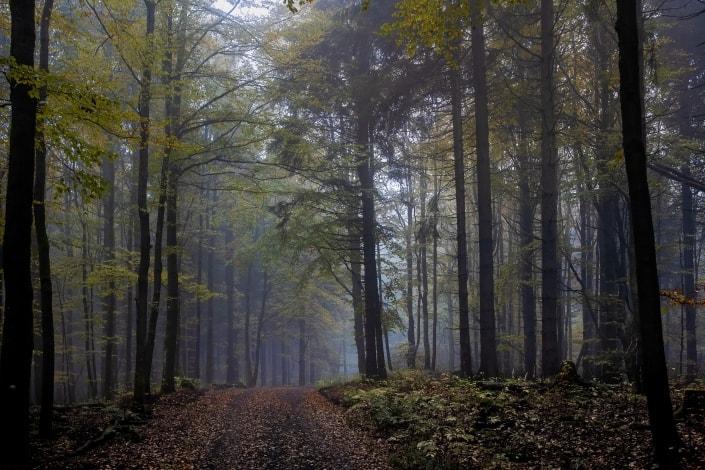 leichter Nebel im herbstlichen Thüringer Wald in der Nähe des Adlersberg bei Vesser Canon EOSR6 & EF 35mm f/1.4l ii usm