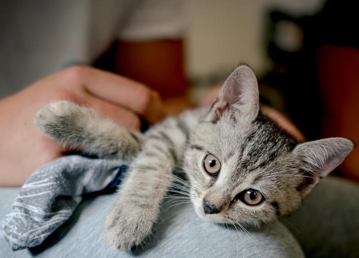 Homeshooting Katzenbaby