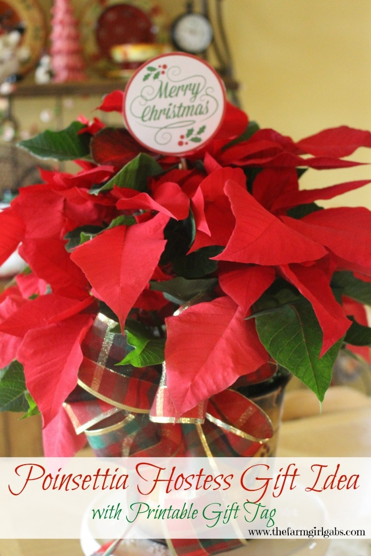 Poinsettia Hostess Gift Idea with a FREE printable Gift Tag. Poinsettias make perfect gifts for the holiday and Christmas.