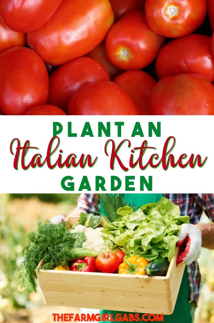 From spaghetti sauce to your favorite pizza toppings, an Italian Kitchen Garden has all the produce and herbs to create an Italian feast! #garden #vegetables #vegetablegardening #gardeningtips #gardening