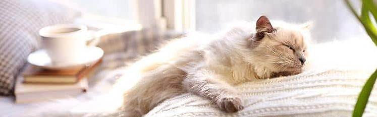 Major Factors That Affect a Cat's Life Span