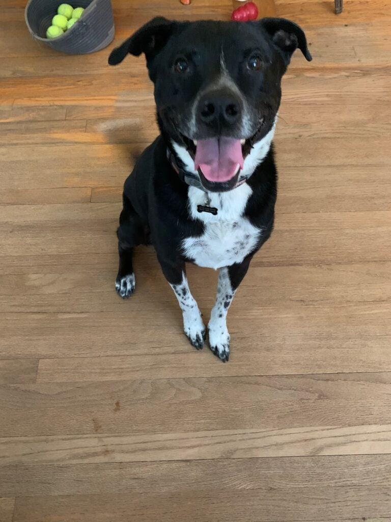 Jake, a happy dog