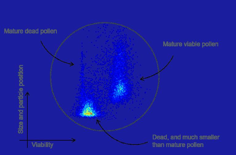 Visualization of scatterplot of analyzed tomato pollen