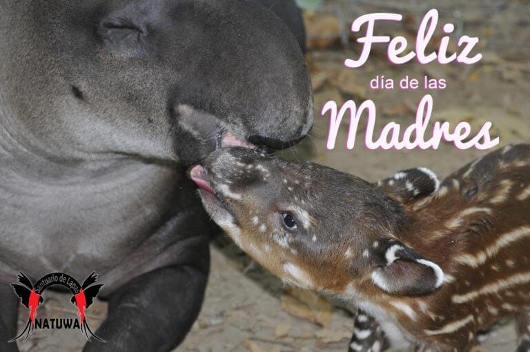 Lee más sobre el artículo Feliz día de las madres!!