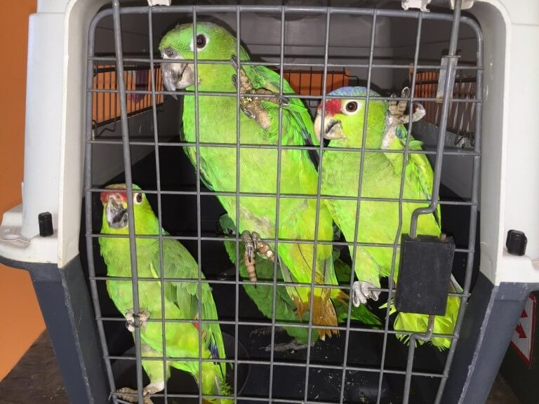 Read more about the article Parrots