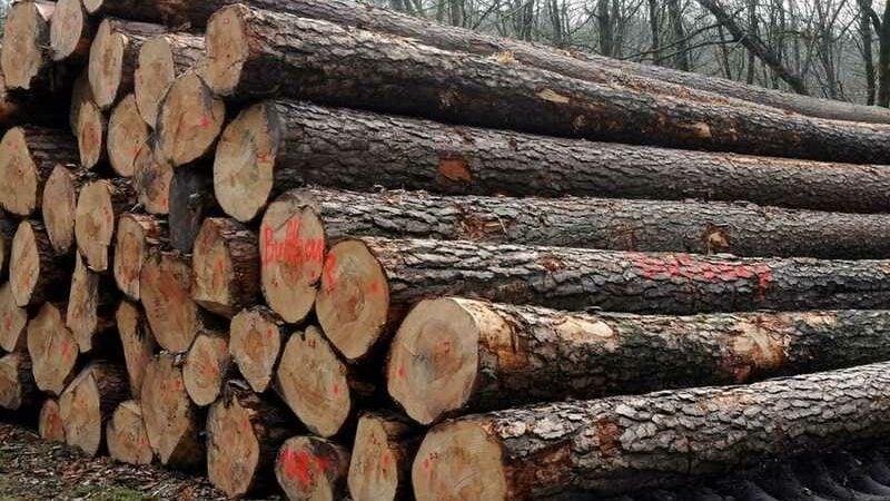 Fúkané drevovlákno výroba 1