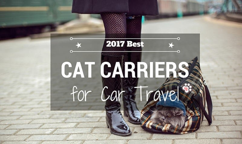 Best Cat Carriers for Car Travel