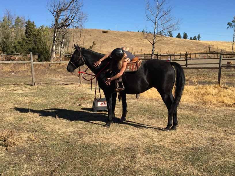 natural horsemanship intern