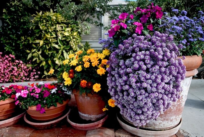 Container Gardening 101: Tips and Tricks To Grow The Most Beautiful Planters On The Block