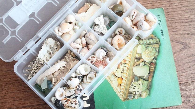 Shells - Image credit: Nimra and Manahil Bandukwala