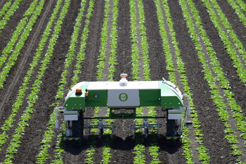 The Dino autonomous vegetable weeding robot by French company Naïo Technologies has actually been on American soil for over a year now. Currently, Dino is being deployed on farms in the Salinas Valley, San Juan Batista and Hollister, all in California.