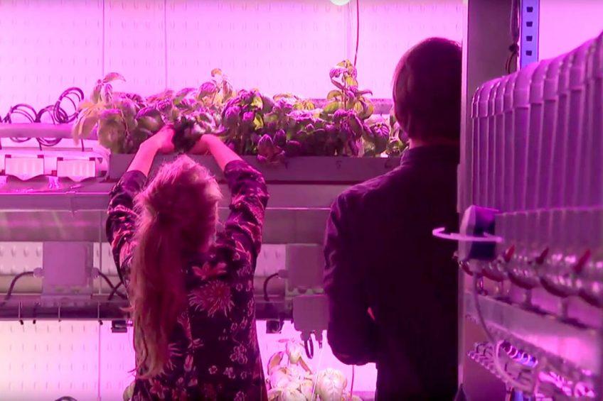 Colruyt Group develops vertical farm