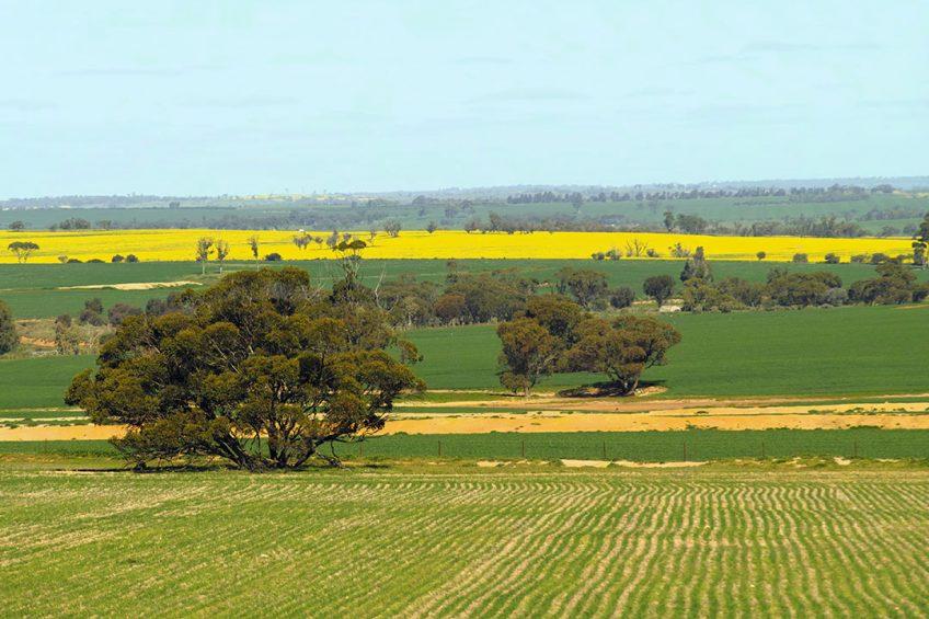 Australian farmers to trial IoT on farms