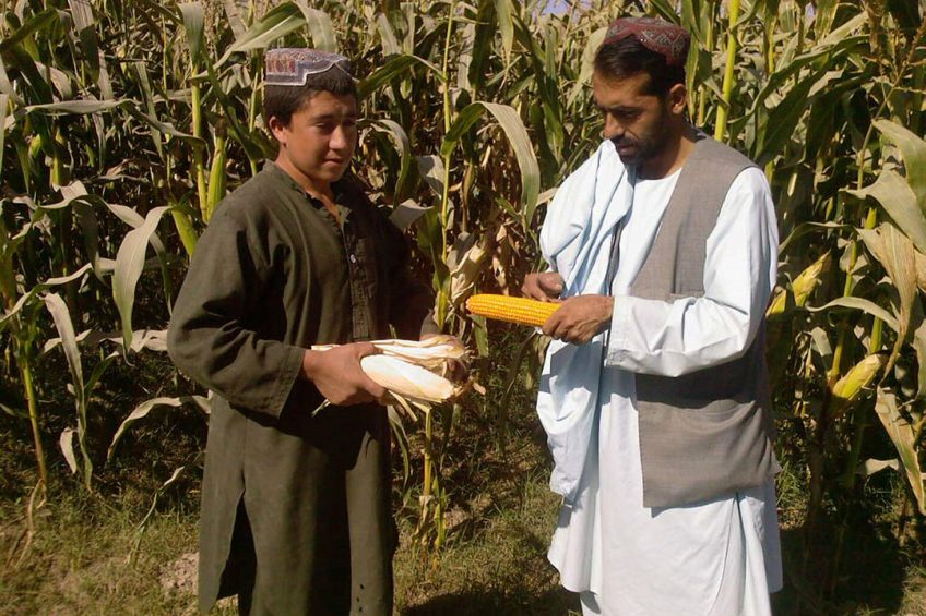Using specialist satellite imagery it is hoped the project will identify suitable maize growing areas in Afghanistan. Photo: Chris McCullough