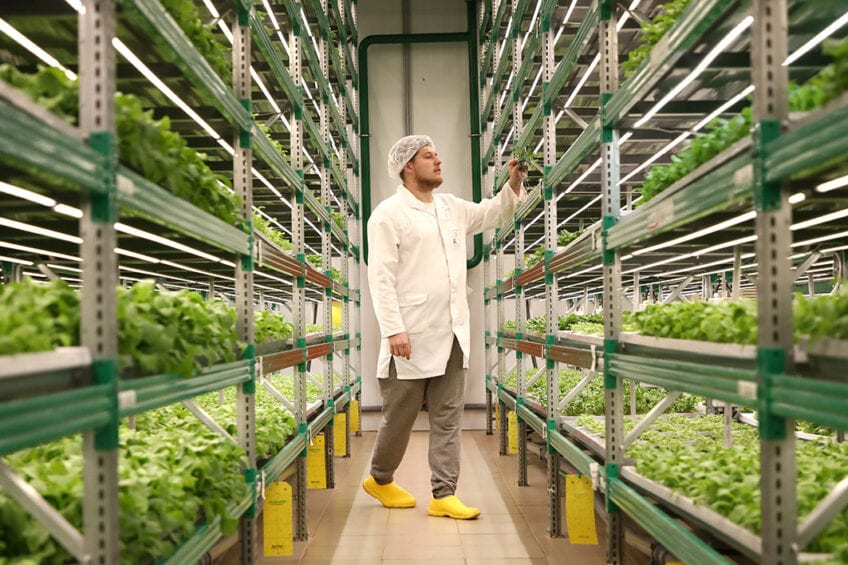 iFarm Project farm in Moscow, Russia. The iFarm Project is a network of automated vertical farms that grow leafy greens, herbs, berries and edible flowers. - Photo: Anton Novoderezhkin/TASS