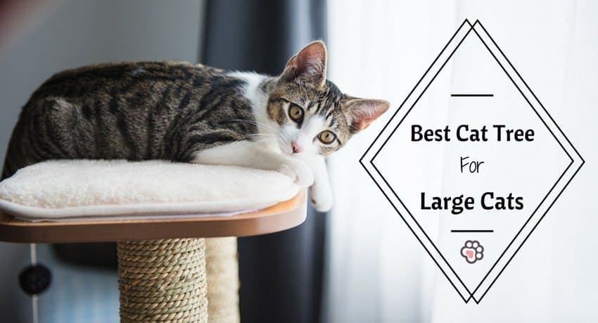 Best Cat Tree for Large Cats: You'll Love These 3 Affordable Picks