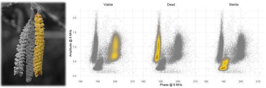 An illustration showing hazelnut pollen phenotyping results