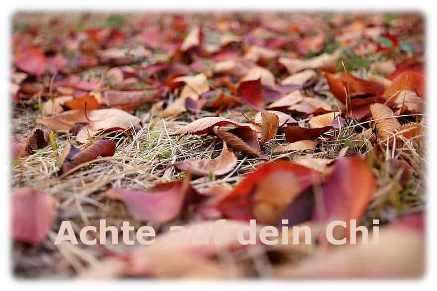 Jahreszeiten, die Übergangszeit ist da, achte auf dein Chi