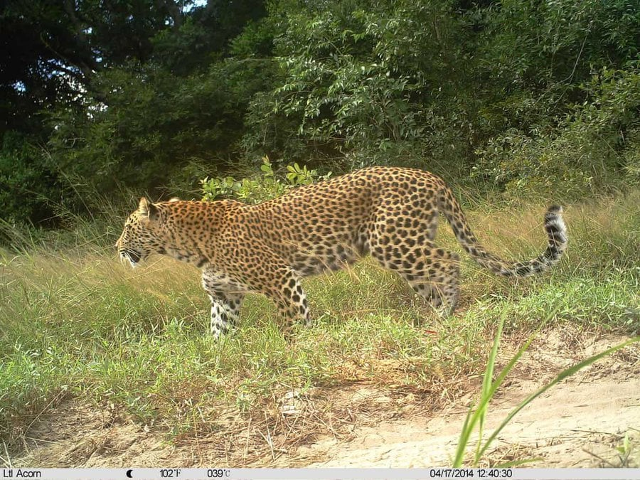 04.17.2014 12h40 1 - How Not To See A Leopard