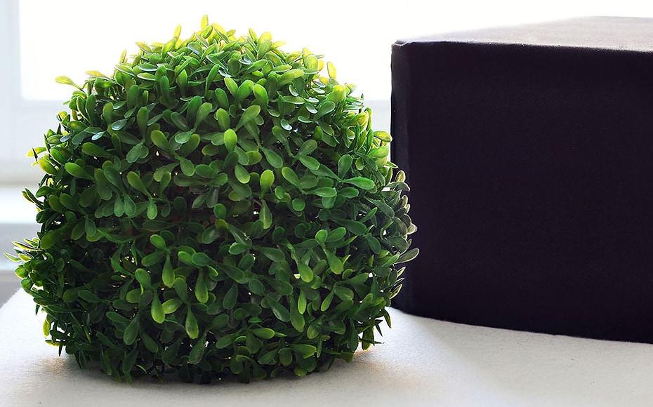 Titelbild Frutex Interactius, kleine runde grüne Pflanze