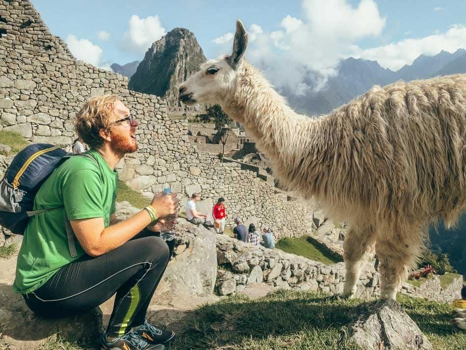 Jeremy having a moment with a llama at Machu Picchu.