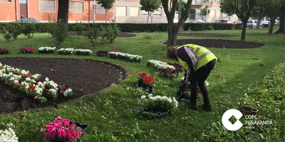 Los jardineros municipales están plantando 6.500 flores de temporada en diferentes zonas del casco urbano.