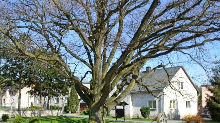 Żyrowa – 700 lat historii