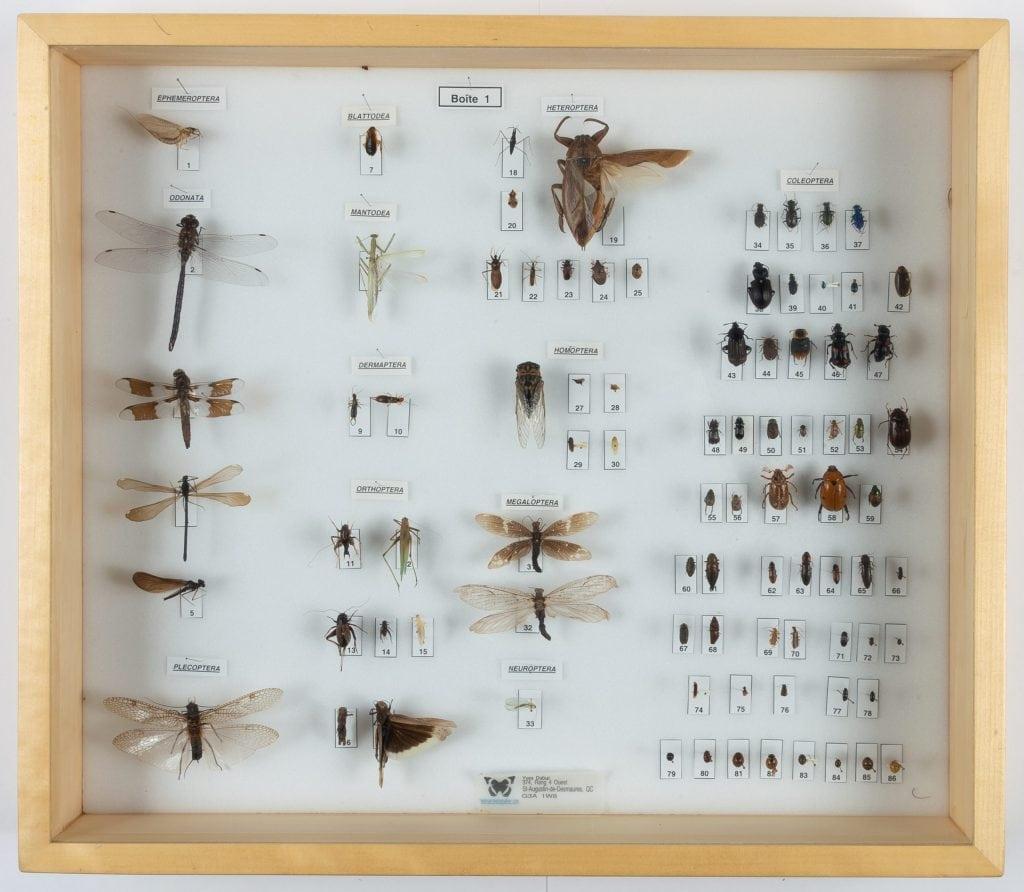 Collection d'insectes / boîte 1