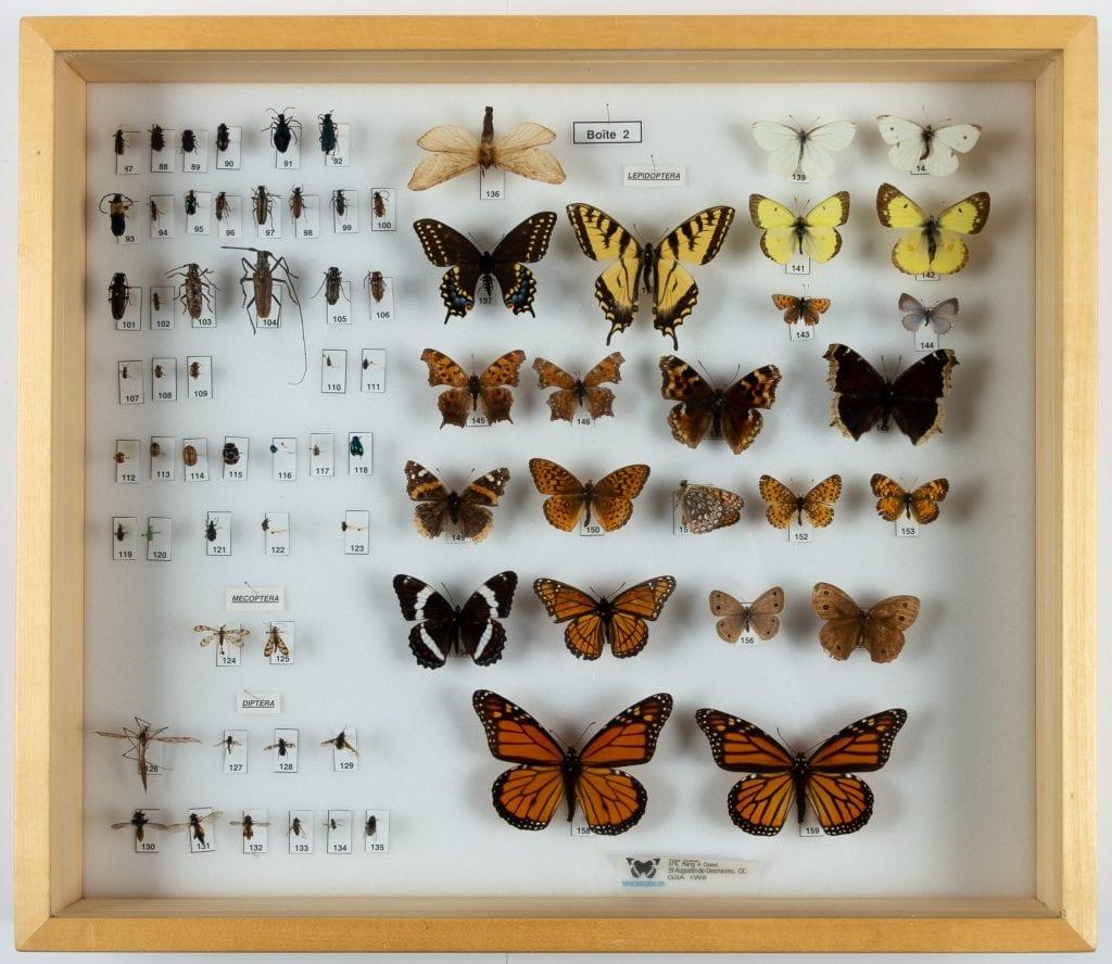 Collection d'insectes / boîte 2