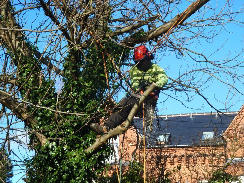 Tree Trimming Oklahoma City - Tree Pruning OKC