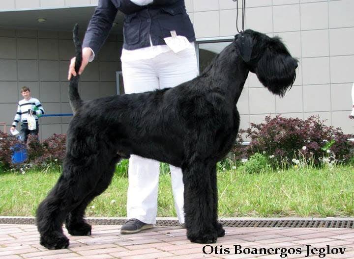 Otis Boanergos Jeglov