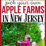 Ready for some fall fun? It's apple season in New Jersey. Take the family out to the apple orchard to pick your own apples. The New Jersey Apple Orchards are the Best Farms To Pick Your Own Apples In NJ. #applepicking #njappleorchards #pickyourownapplesnj