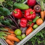 How To Grow A Fall Vegetable Garden