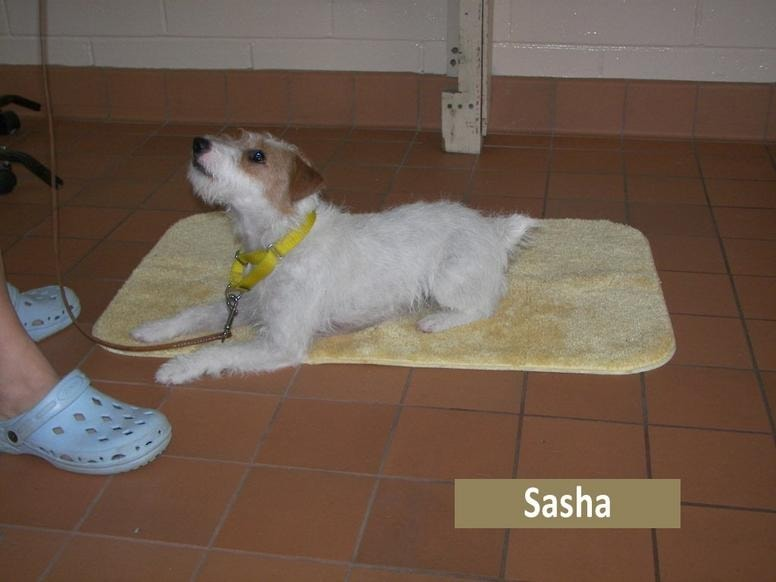 An expectant dog lying on a mat, waiting for a cue from its owner