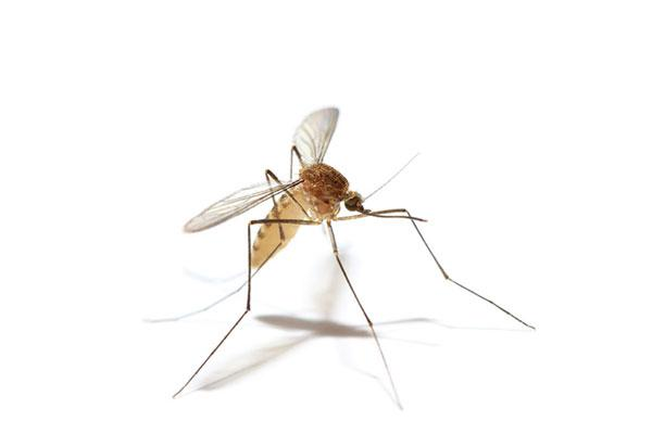mosquito elimination services
