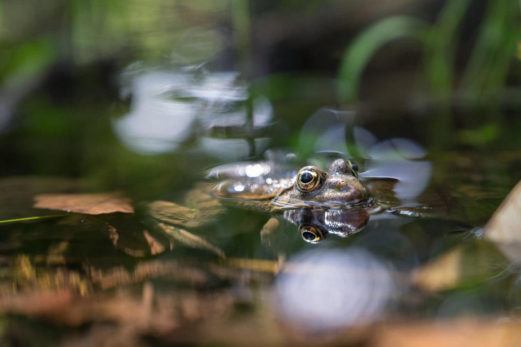 Mein erster Blogbeitrag mit einem Frosch im Wasser