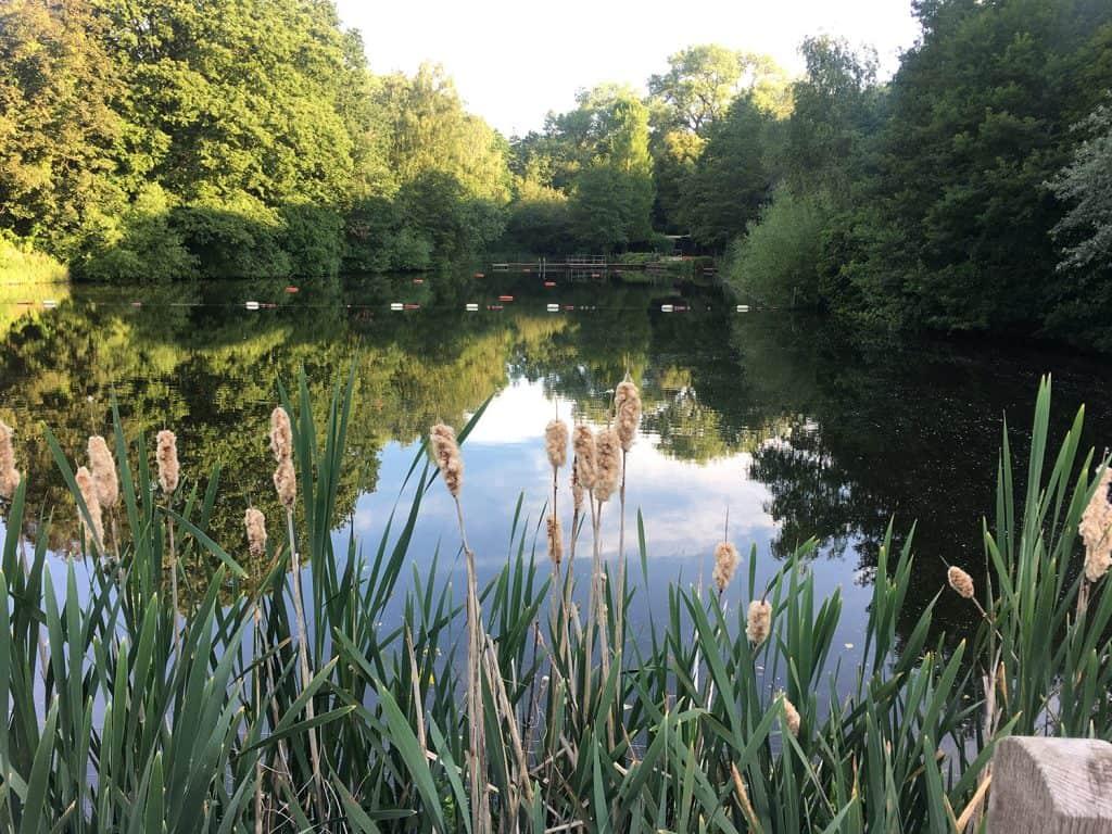 Hampestead Heath mixed ponds