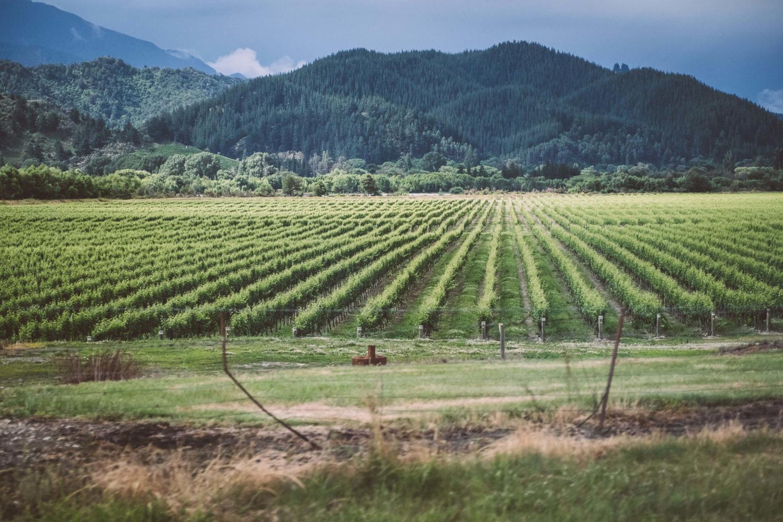 Weinberge vor bewaldeten Hügeln