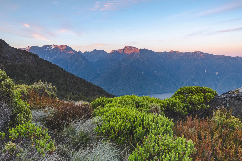 Abendsonne auf Bergen im Hintergrund mit Pflanzen im Vordergrund