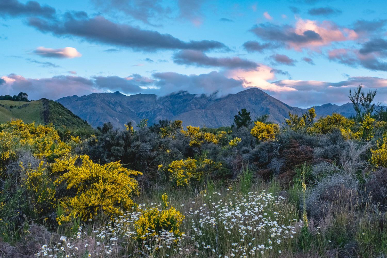 Gelbe Büsche beim Sonnenuntergang vor Bergen