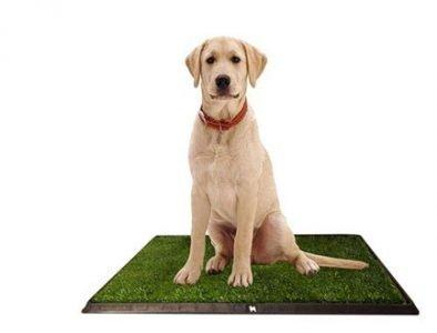 Dog and indoor dog potty