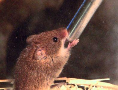 best mouse water bottle